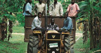 Kakaobauern auf Traktor in Plantage
