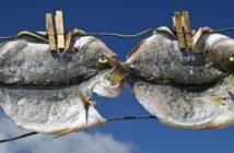 Fische auf der Wäscheleine