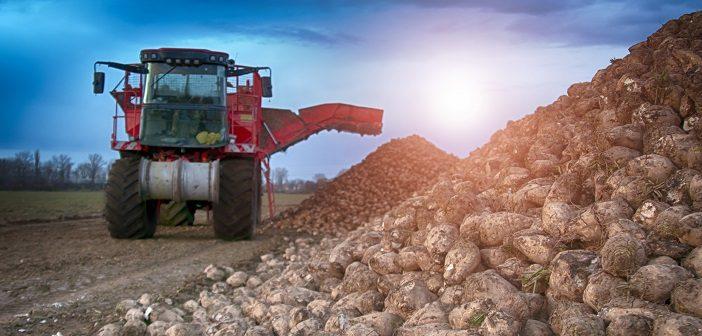 Südzucker startet Bio-Zucker Produktion