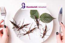 Stduie Uni Hohenheim InsektenHumbold Reloaded_Michal Ludwiczak