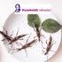 Bereit für nachhaltige Insekten-Snacks?